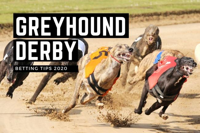 The English Greyhound Derby starts on Friday October 2
