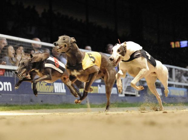Royal Borough Observer: Greyhounds racing